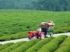 两部委发文支持农村电商,农淘春天已来!